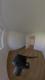 Kinderzimmer/Arbeitszimmer